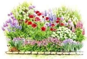 низькорослі багаторічні квіти підібрати для клумби квітучі все літо