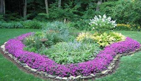 Низькорослі багаторічні квіти квітучі все літо для оригінальних клумб з фото та описом