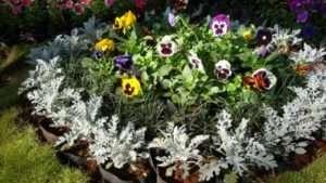 Клумба з однорічними квітами - оформлення на дачі та в саду