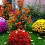 Які однорічні квіти цвітуть все літо. Каталог рослин з фото і назвами