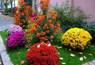 Однорічні квіти для саду, дачі та клумби. Каталог однорічних садових квітів з фото та описом