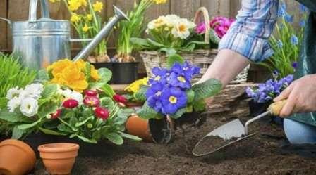 Травневі роботи в саду на клумбі - які квіти садити в травні, однорічні чи багаторічні у квітнику
