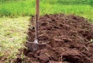 Як вносити добрива для картоплі при посадці