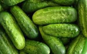 Каталог високоврожайних сортів огірків для посадки у відкритому грунті