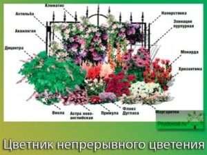 Квітник безперервного цвітіння, схема
