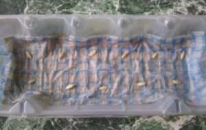Підготовка ґрунту і грядки