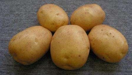 Картопля сорту Лідер: характеристики і опис сорту