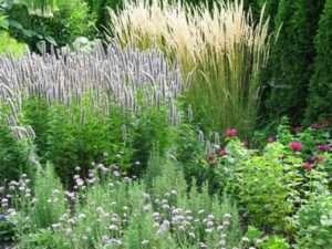 Пряно-ароматні невибагливі багаторічні квіти для дачі