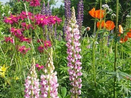 Багаторічні квіти для дачі - огляд найкращих невибагливих багаторічників з фото та назвам