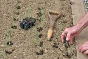 Що потрібно зробити на городі в травні