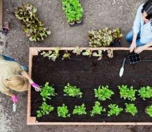 Прополка стає одним з найважливіших, трудомістких, але вдячних видів робіт на городі в травні.