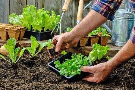 Календар дачника: сезонні роботи на городі в травні