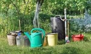 Боротьба зі шкідниками та обрізка в саду в серпні