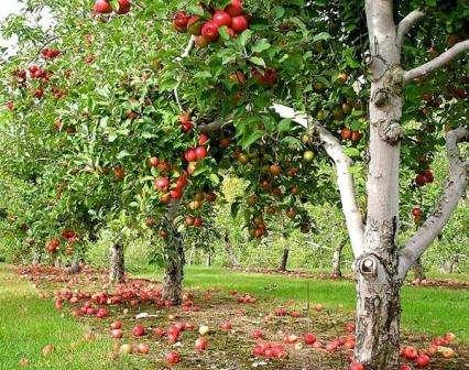 Календар дачника: сезонні роботи в саду в серпні - що і коли робити