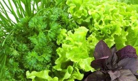 Збереження зелені на зиму: сушка, замороження, консервація, соління в домашніх умовах з фото