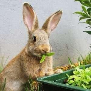 Турбота про кроликів в серпні