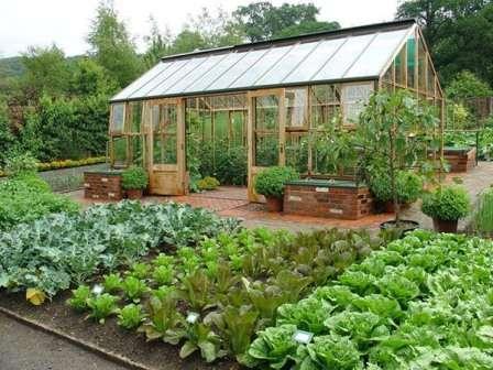 Дачний календар городніх робіт на червень місяць - корисні поради по догляду за овочами на городі у червні