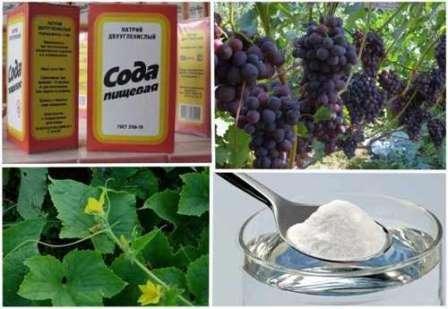 Харчова сода застосування в домашньому господарстві: корисні поради на всі випадки життя