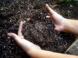 Відмінний нейтралізатор ґрунту - харчова сода