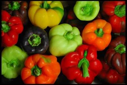 Кращі сорти перцю для вирощування на городі у 2019 році в Україні - опис та характеристика з фото