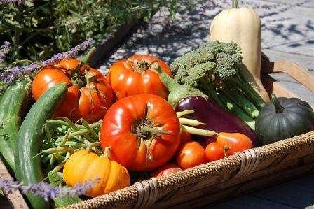 Правильний полив овочів влітку: корисні поради городникам про те як поливати овочі на городі літом
