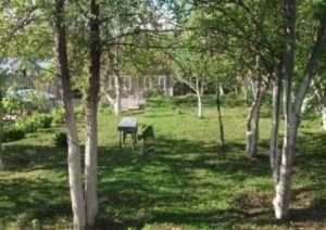 Роботи в плодоносному саду на початку осені