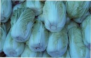 чорна кільцева плямистість капусти