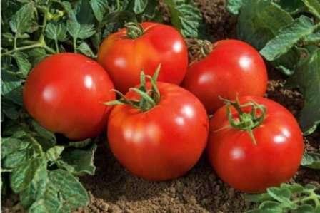 Томат Благовіст: основна характеристика та опис сорту, секрети вирощування плодів з фото
