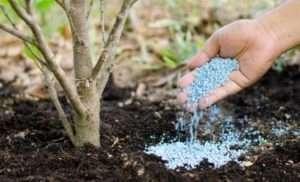 Мінеральні добрива як підгодівля для рослин
