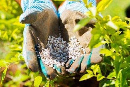 Добрива для підгодівлі рослин (органічні і мінеральні) - опис, застосування та характеристика з фото