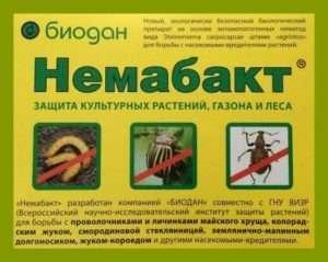 Біологічний препарат «Немабакт» проти дротяника