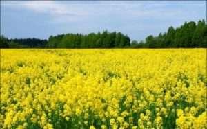 Відгуки про засоби захисту рослин від дротяників