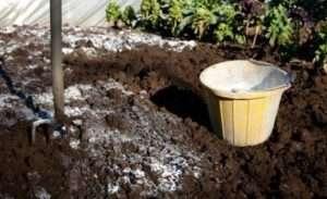Вапнування ґрунту для захисту від дротяника