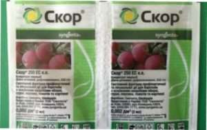 Хвороби і шкідники винограду та засоби захисту від них: чим обприскувати лозу