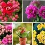 Найкрасивіші кімнатні квіти - каталог з фото та описом