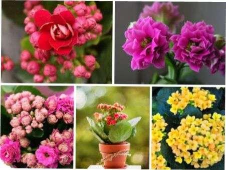 Найкрасивіші кімнатні рослини на будь-який смак для власного дому