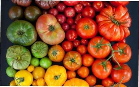Незвичайні сорти помідорів: 10 кращіх сортів томатів для вирощування на вашому городі