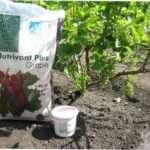 Як підживлювати виноград мінеральними і органічними добривам