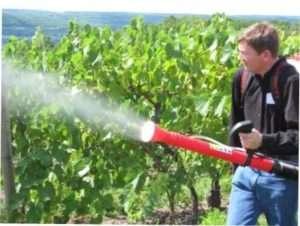 Підживлення винограду мікроелементами: норми внесення добрив