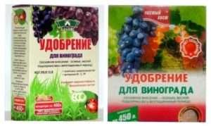 Удобрювання і підживленя винограду