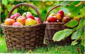 Відео: Збір врожаю яблук самостійно