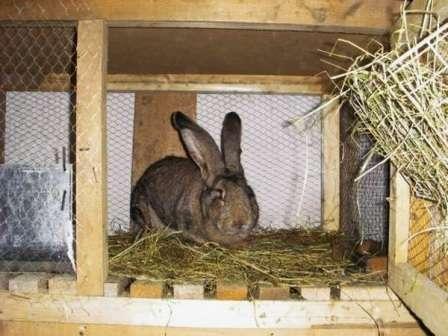 Як зробити клітку для кроликів
