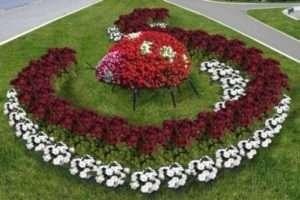 Створюємо квіткову гармонію