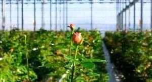 У теплиці можна виростити багатий урожай