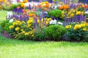 Які переваги у безперервно квітучих клумб? Їх особливості