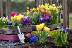 Вибираємо сезонні рослини
