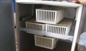 Скільки яєць різної птиці поміщається в інкубатор Півень