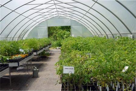Вирощування розсади в теплиці: 9 принципів енергозбереження