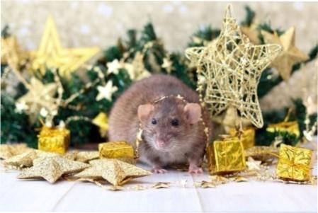 Меню на рік білого металевого пацюка (щура)