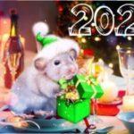 Салати на Новий 2020 рік білого металевого щура (пацюка), прості і смачні рецепти